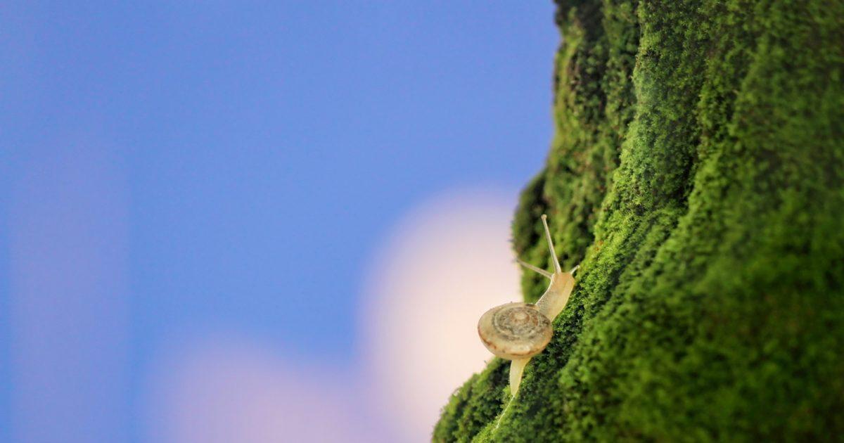 snails is slow